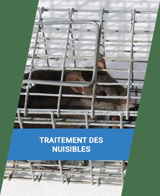 désinfection à Annecy | Saded Savoie