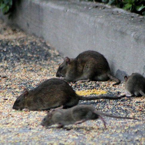 nids de guêpes à Annecy | Saded Savoie